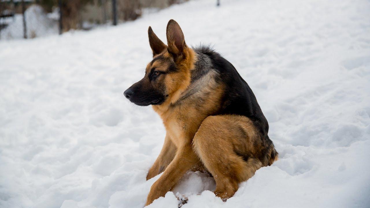 Seulement 14 chiens dans le monde sont comme lui!